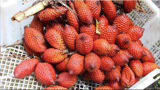gambar buah kelubi, salak hutan