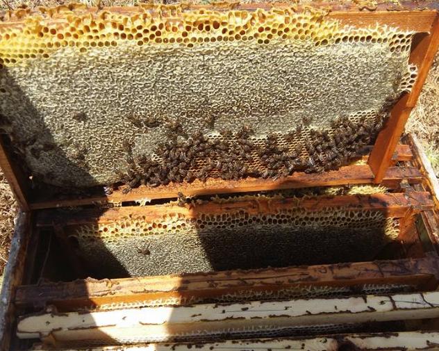 Η διάταξη των κηρηθρών: Που βρίσκεται το μέλι η γύρη ο γόνος, και μερικά μυστικα...