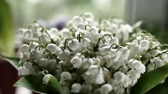 Most Poisonous Plants, Lily of the Valley