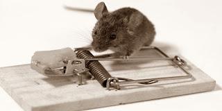 Kisah Seekor Tikus