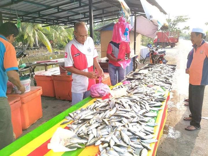 Ikan Kembung Segar Murah RM1 Sekilo di Kuala Kedah