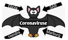 Why bats carry so many diseases?-Like-Coronaviruses