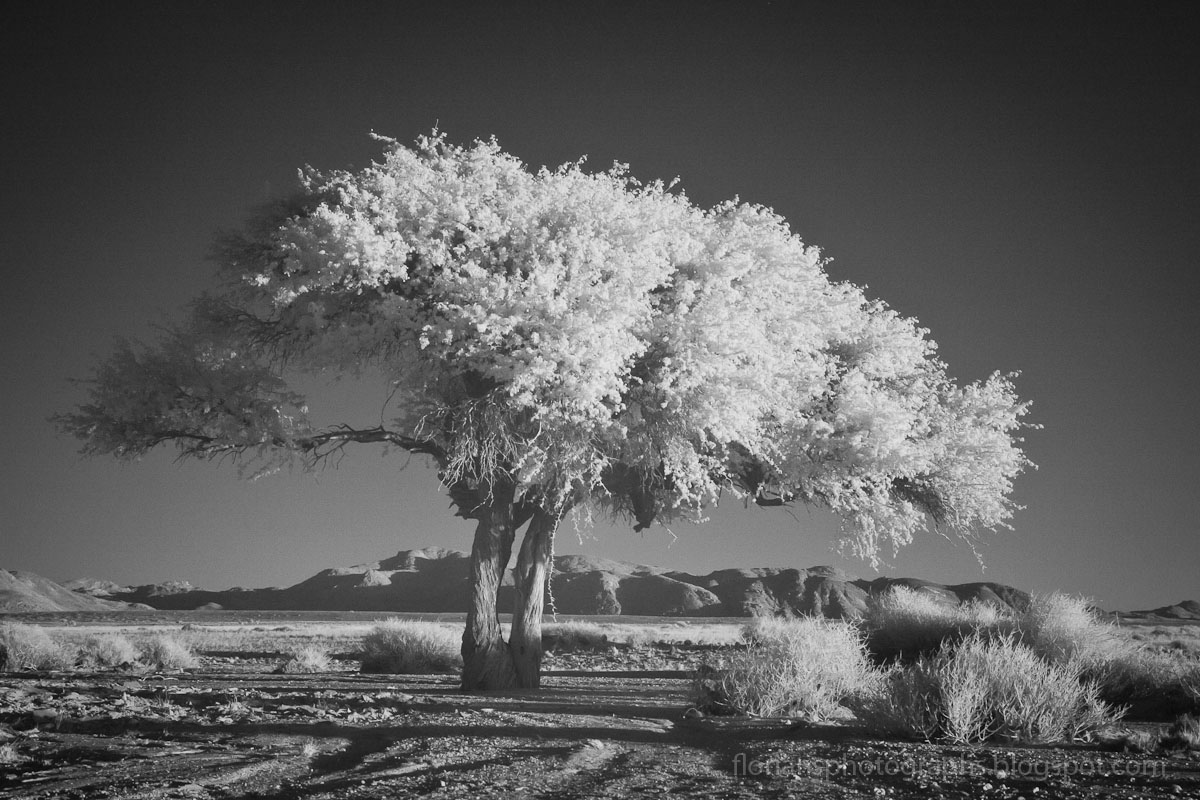 Florians photographs infrared photography