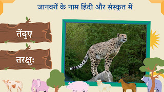 leopard name in sanskrit and hindi with images