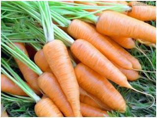 melhores-alimentos-antienvelhecimento-cenouras