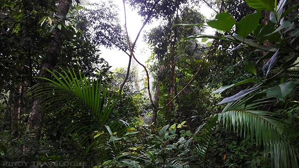 Pico de Loro forest