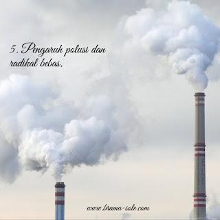 Pengaruh polusi dan radikal bebas.