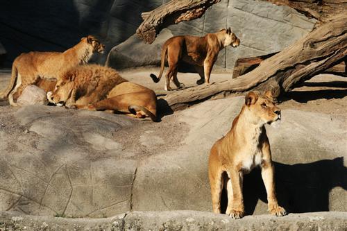 Tierpark Norddeutschland
