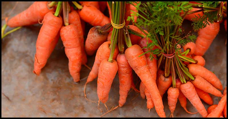 Carrots: How It Helps People With Diabetes