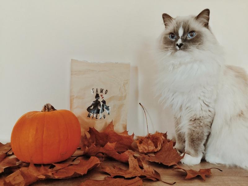 kot warszawski, koci konkurs, konkurs kot warszawski, konkurs, konkurs kocie przysmaki, konkurs kocie nagrody, samo mięso, przysmaki dla kota, przysmaki samo mięso, zdrowe przysmaki dla kota, koci influencer