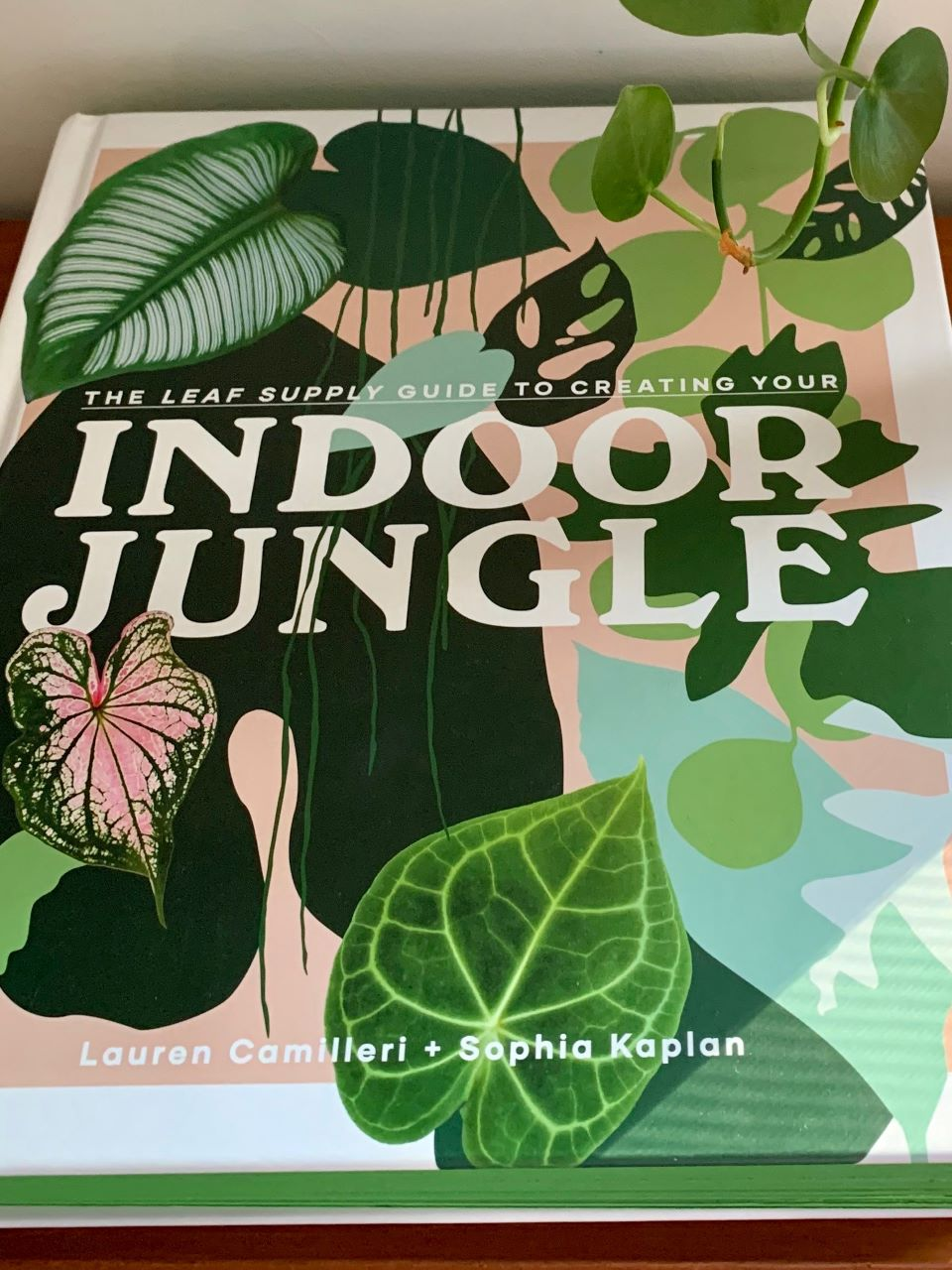 The indoor Jungle book #ad