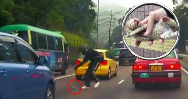 На шоссе лежал беззащитный Лёвушка! Парень рисковал жизнью, чтобы спасти кроху…