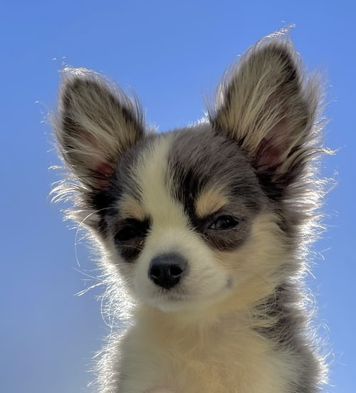 Baby Dog Wallpapers
