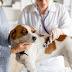 Βρέθηκε σκύλος θετικός στον κοροναϊό