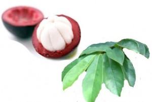 Obat Ginjal Tradisional Herbal