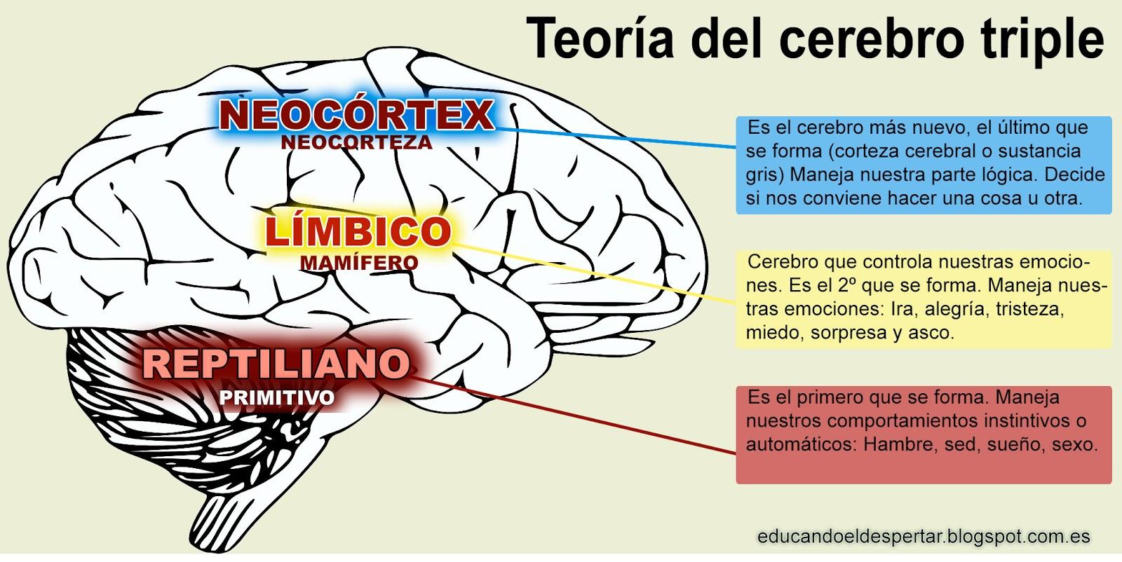 como despertar el cerebro