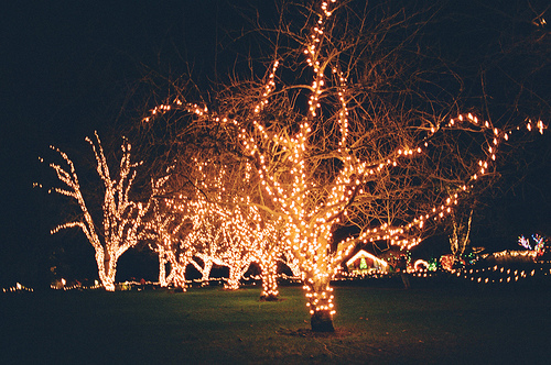 warm Christmas lights dp image