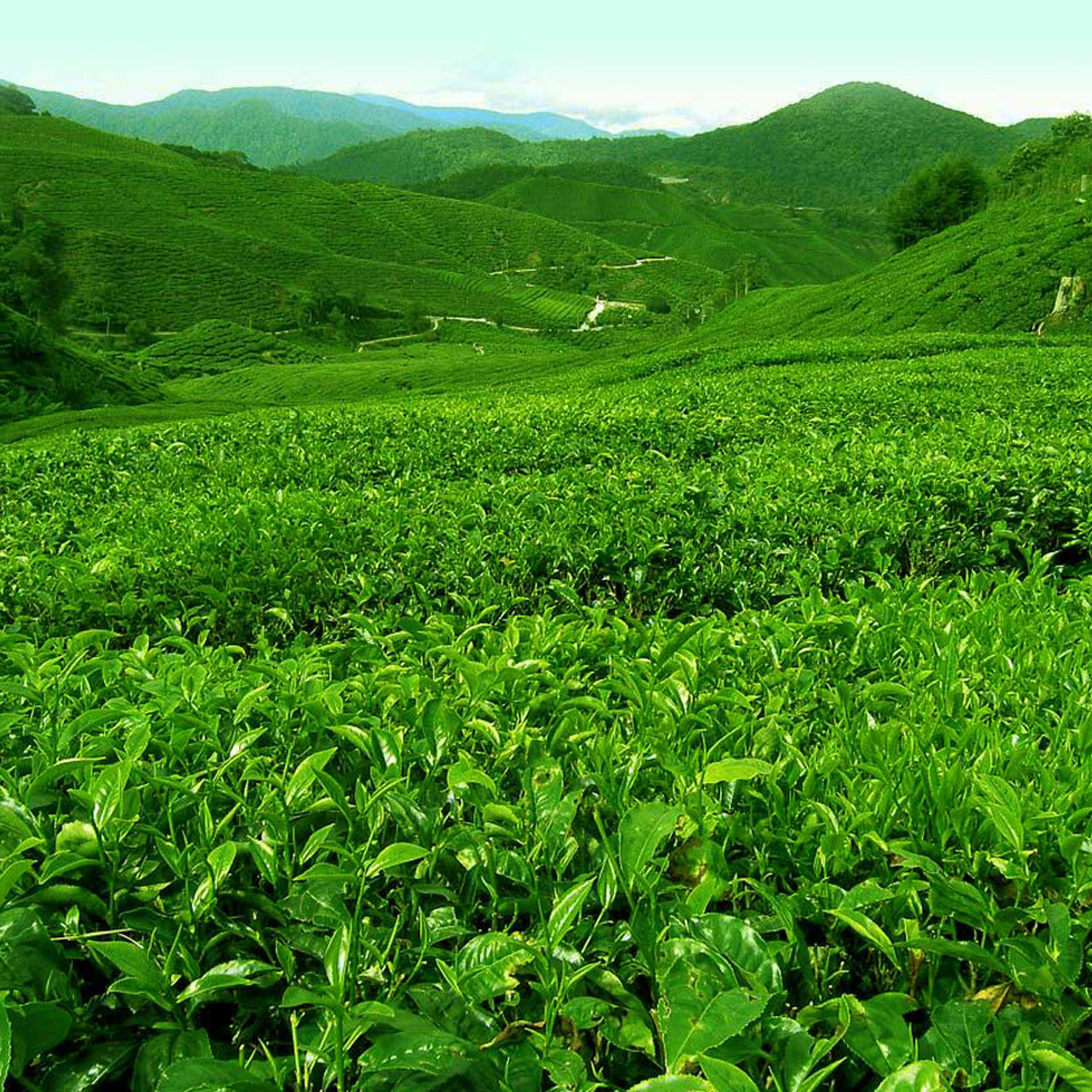 Homesty Munnar Tour Packages Munnar Holiday Packages Munnar