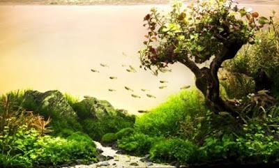 Gaya Aquascape Natural