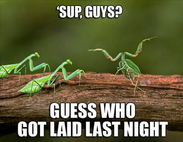 Funny Praying Mantis Meme Joke Picture