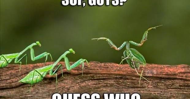 Funny Jokes N Pictures Praying Mantis Meme