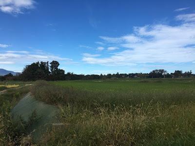 佐渡島の田園地帯