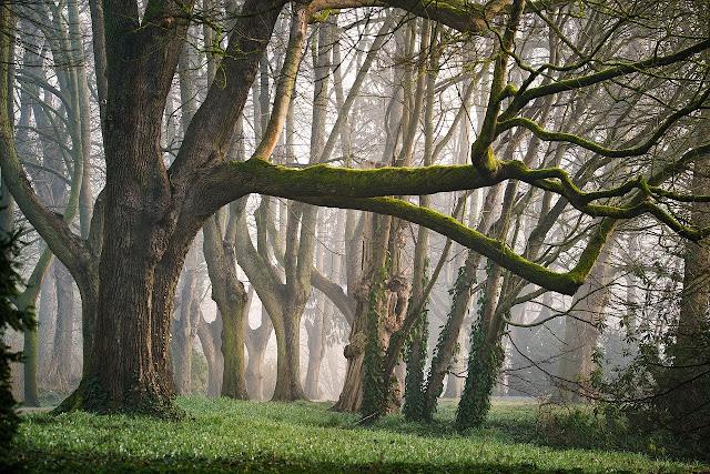 أجمل خلفيات الطبيعة والاشجار
