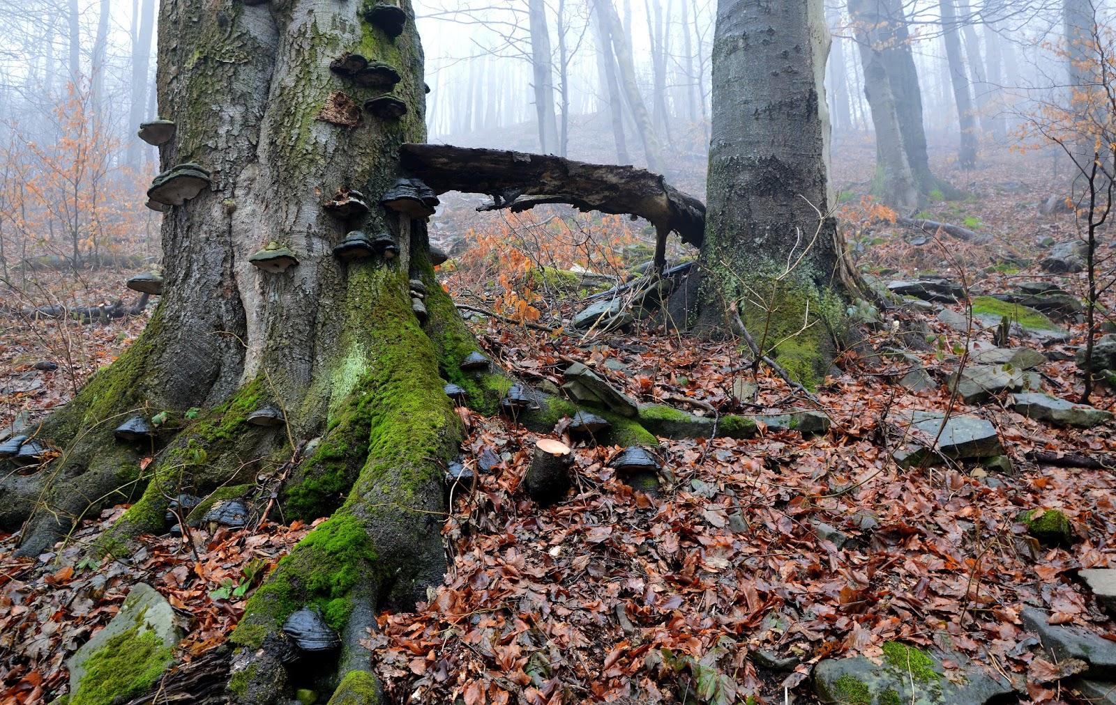 Beskid Niski, Tajemniczy las, Mgła