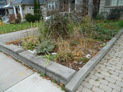 Bedford Park Toronto Fall Front Yard Cleanup Before by Paul Jung Gardening Services--a Toronto Gardening Company