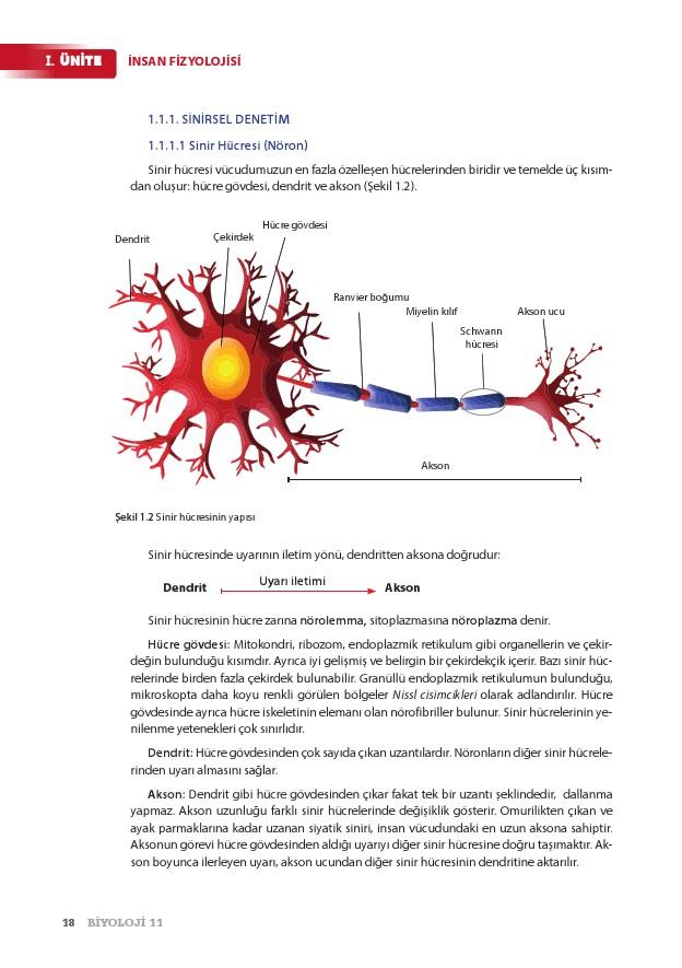 11. Sınıf Biyoloji Ders Kitabı Cevapları Köke Yayınları Sayfa 18