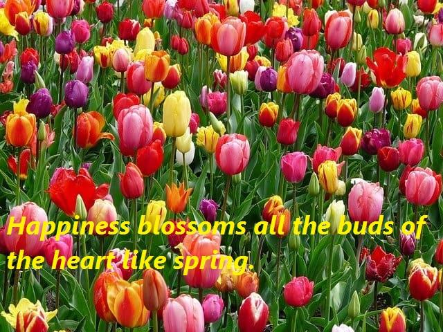 blossom, spring
