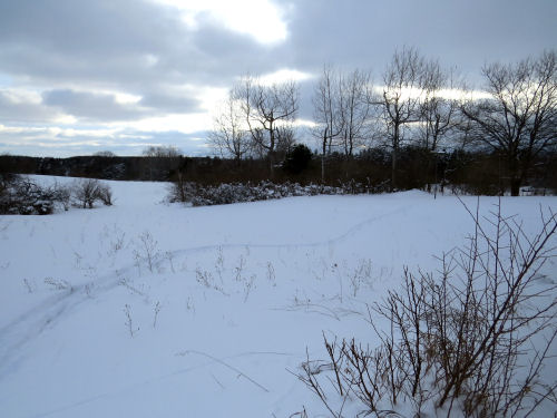 winter landscape with snowshoe tracks