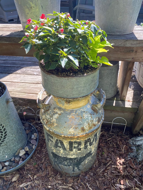 Photo of a funnel of impatiens & sweet potato vines.