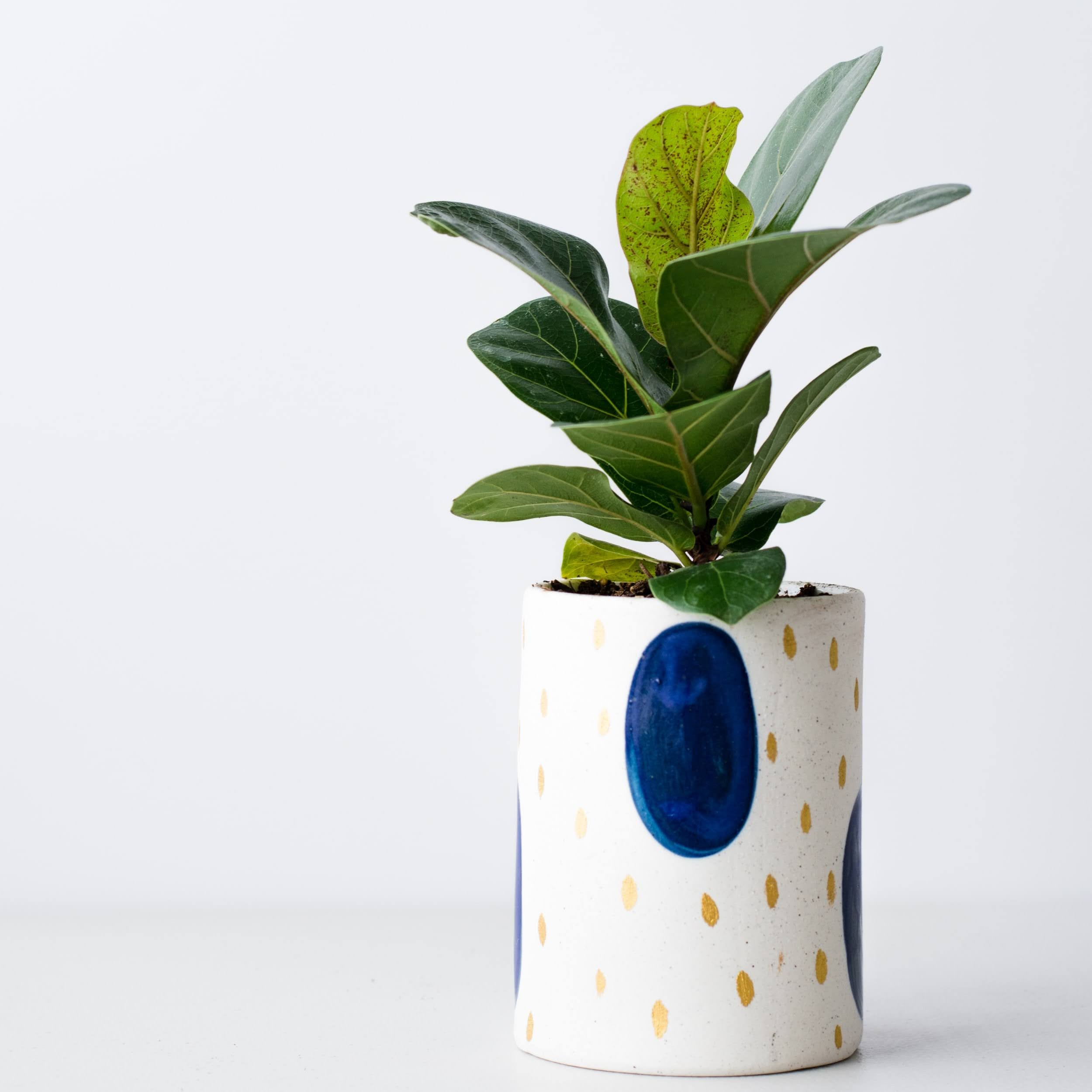Mini Fiddle Leaf Fig | Photo by Kelsey Brown via Unsplash
