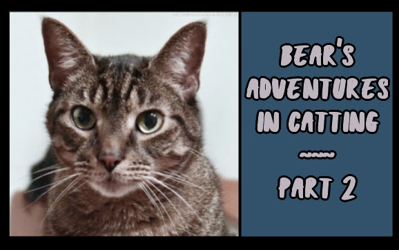Bear's Adventures in Catting, part 2