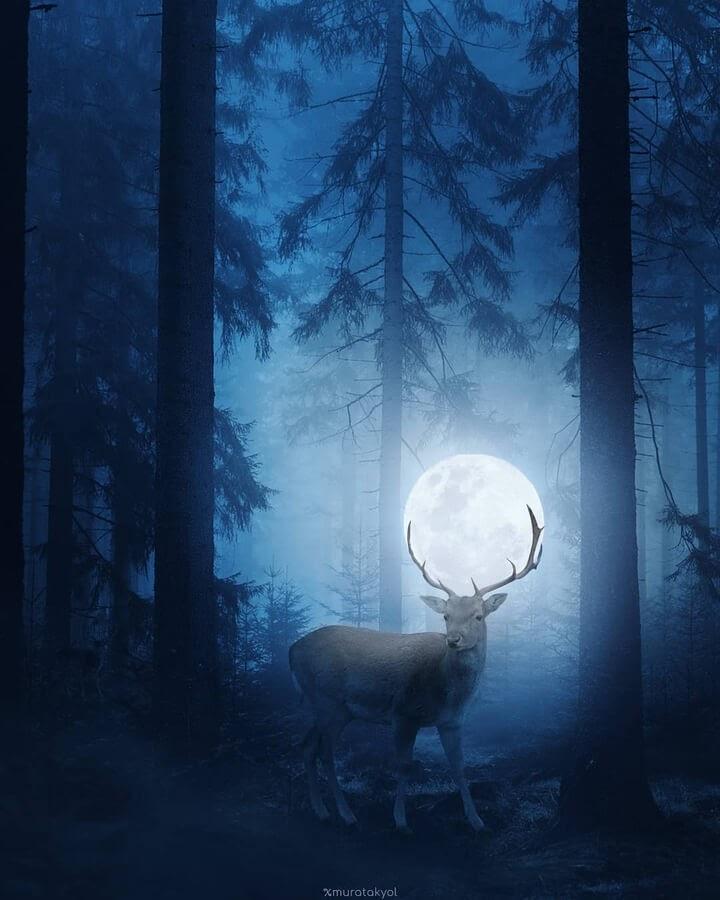 03-The-deer-and-the-full-moon-Murat-Akyol-www-designstack-co