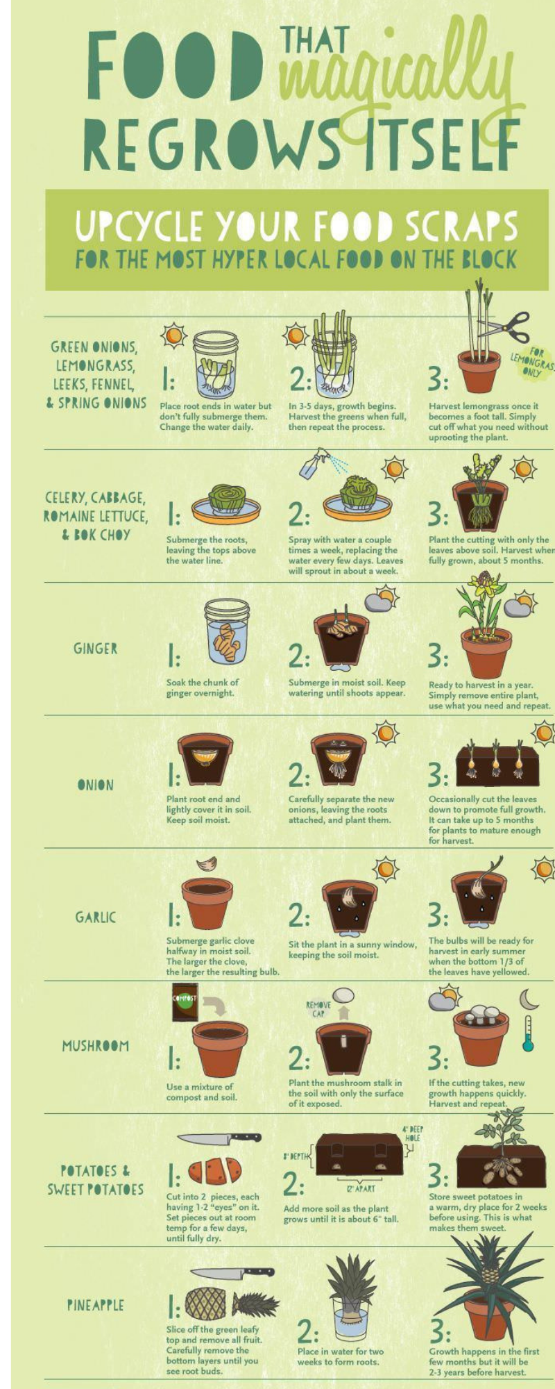 You Can Recycle and Regrow These Food Scraps - Infographic