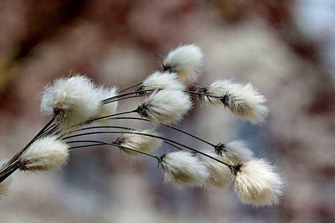 Calcinha de algodão: vantagens e modelos