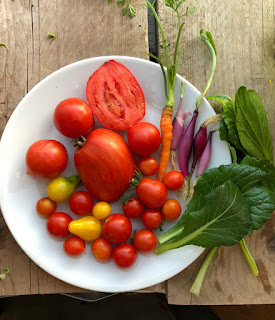 Homegrown harvest: Colourful plate of yellow, red and orange tomatoes with salad leaves and purple spring onions.