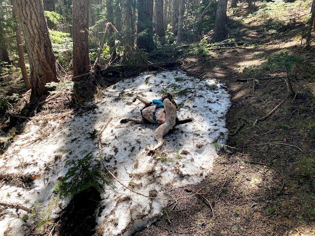 Cedar has no shame when it comes to snow