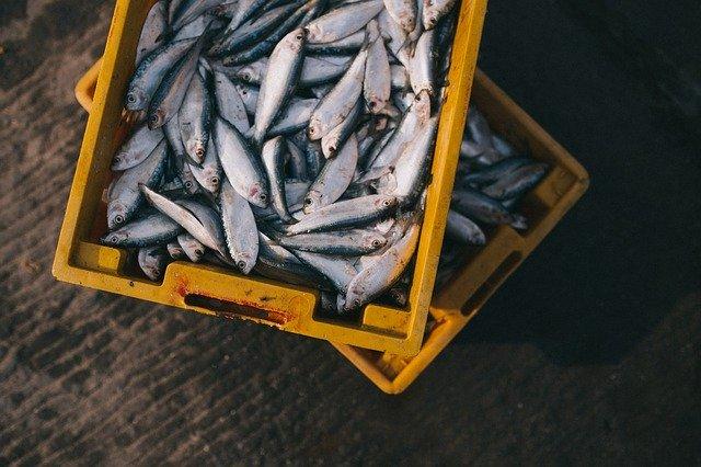 ما هي فوائد أكل السمك لصحة الإنسان