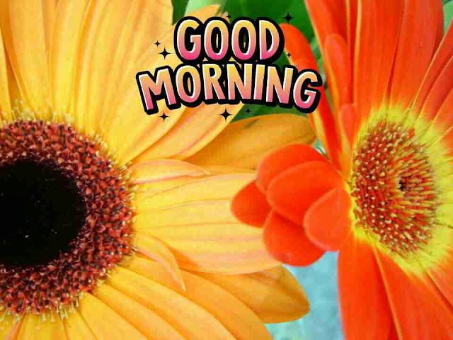 Beautiful good morning pictures with sun flowers