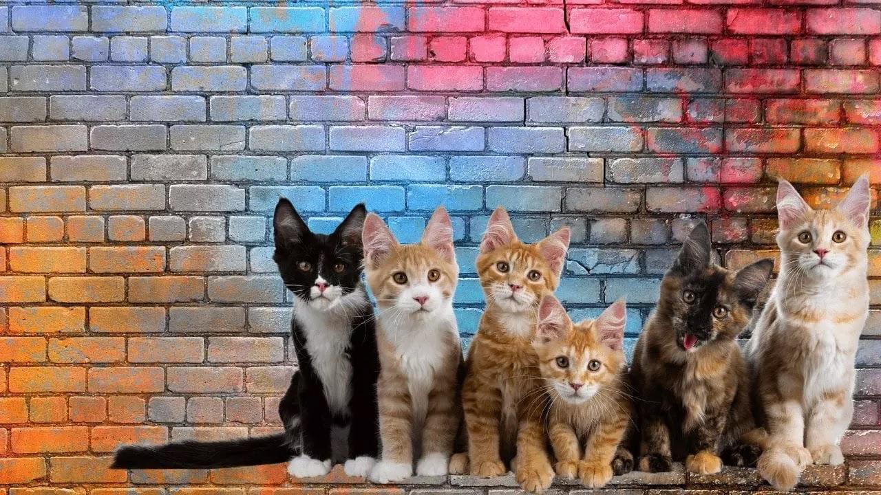 muchos bellos gatitos en un muro