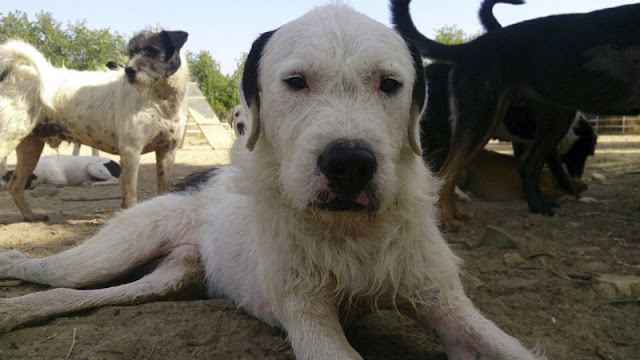 Tu pequeña ayuda es un gran paso hacia el bienestar de los perros sin hogar
