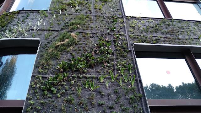 renovacion jardín vertical