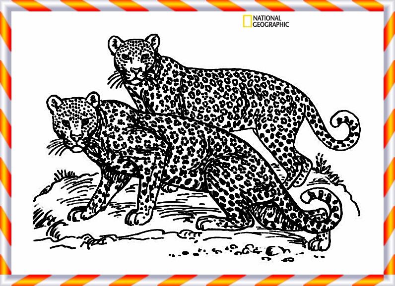 39 leoparden bilder zum ausdrucken  besten bilder von