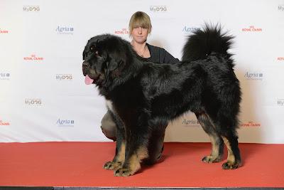 himalayan dog breeds