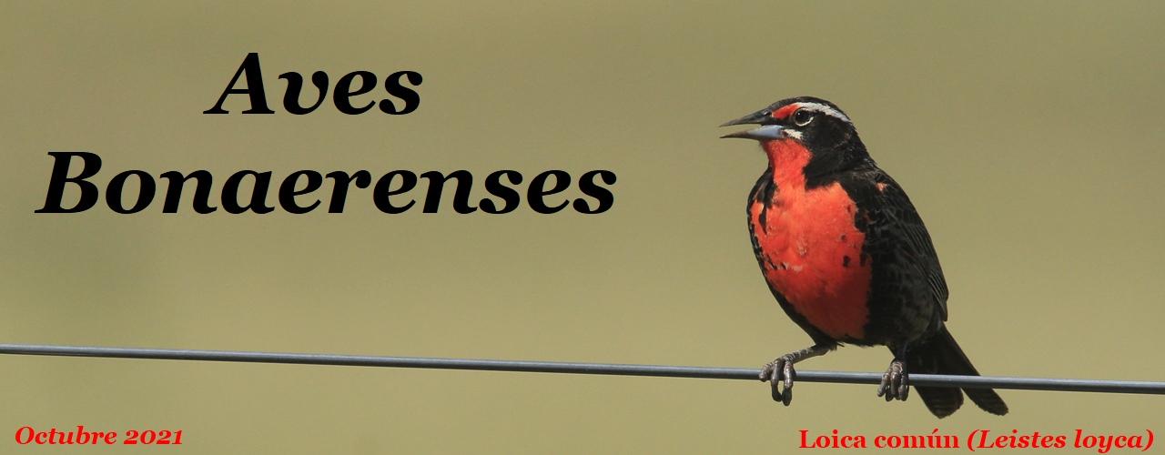 Aves Bonaerenses
