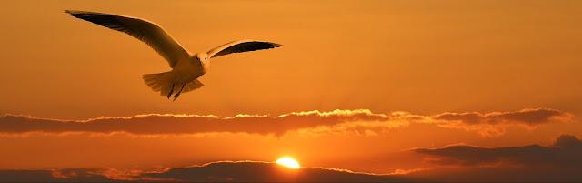 طيور النورس اغنية