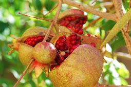 Fungsi antioksidan dalam bahan makanan